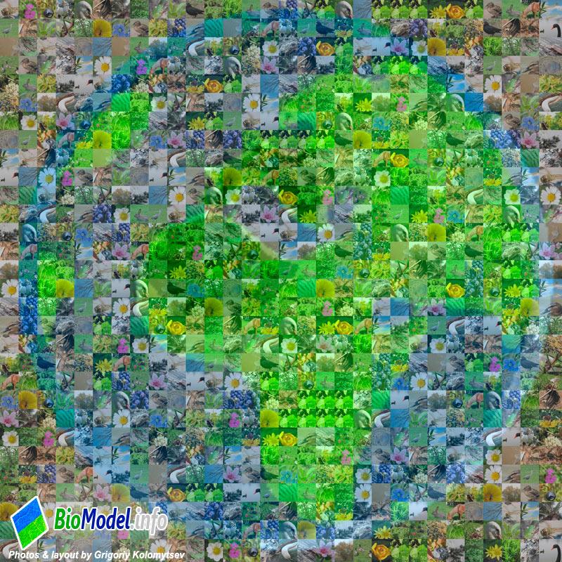 biodiversity_earth_sm