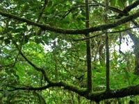 2011 міжнародний рік лісів