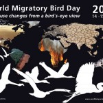 Migratory Birds day poster