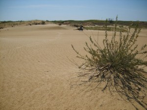Today is the World Day to Combat Desertification