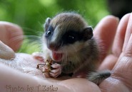 2013: Happy New Dormouse Year…in Ukraine!